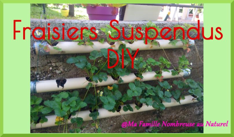 fraisiers suspendus
